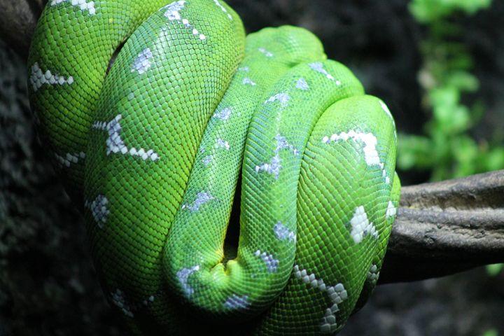 Snake - Lexy's Photography
