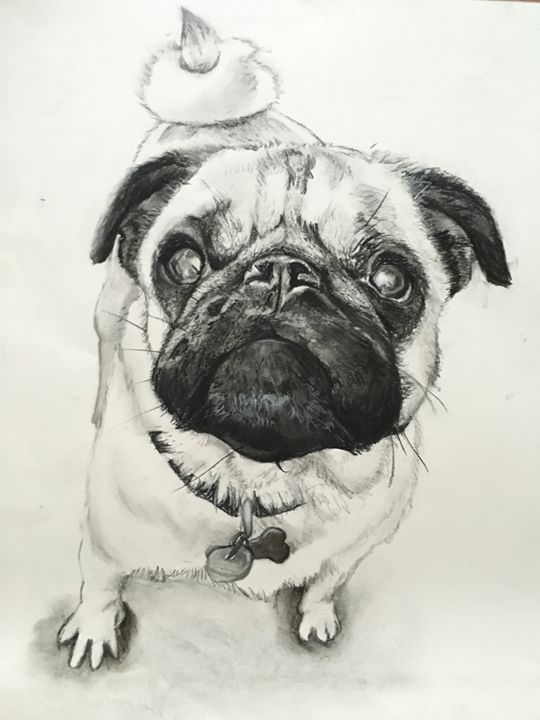 Mia the Pug - Work by Katelyn