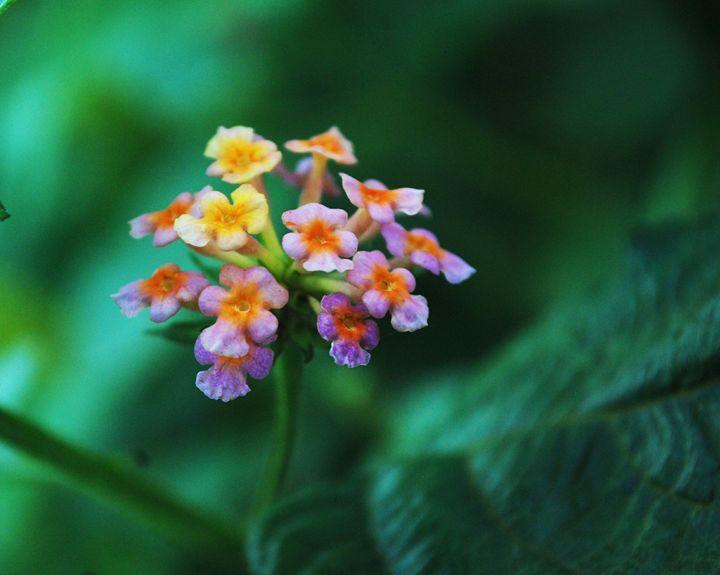 flower - sachin's art