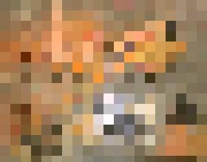 Euphoria - Arpad Royal