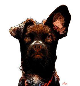 Rio the Spanish rescue dog - arTully