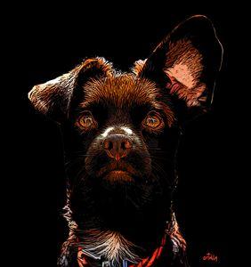 Rio the Spanish rescue dog