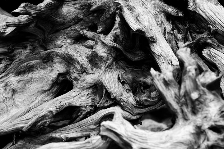 Decayed Beauty - Black & White - Chuck Redick