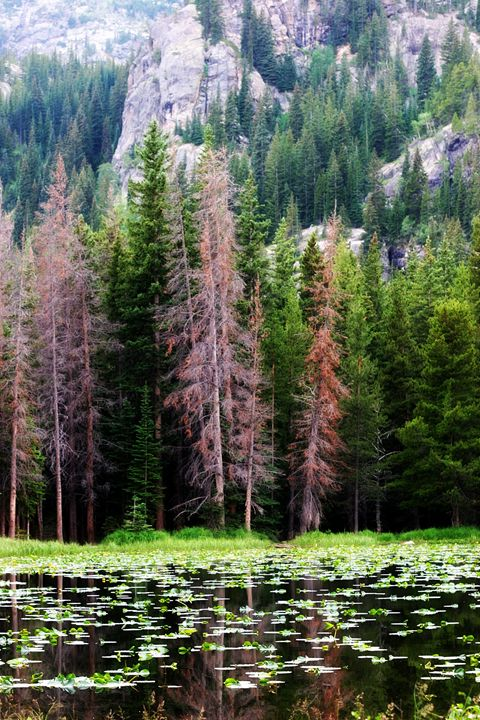 Peace Of The Rockies - Chuck Redick