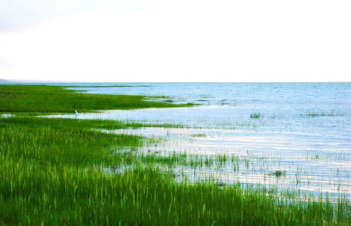 Wet Serenity - Chuck Redick