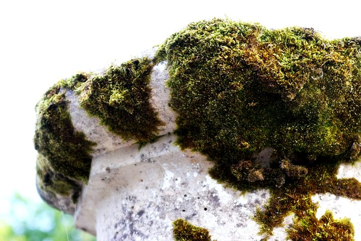 Time-gathered Moss - Chuck Redick