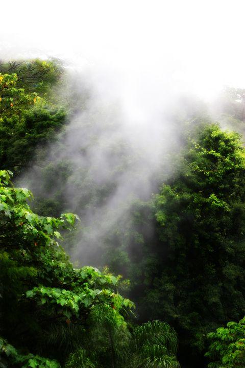 Costa Rican Mist - Chuck Redick