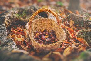 chestnuts vintage background - harve