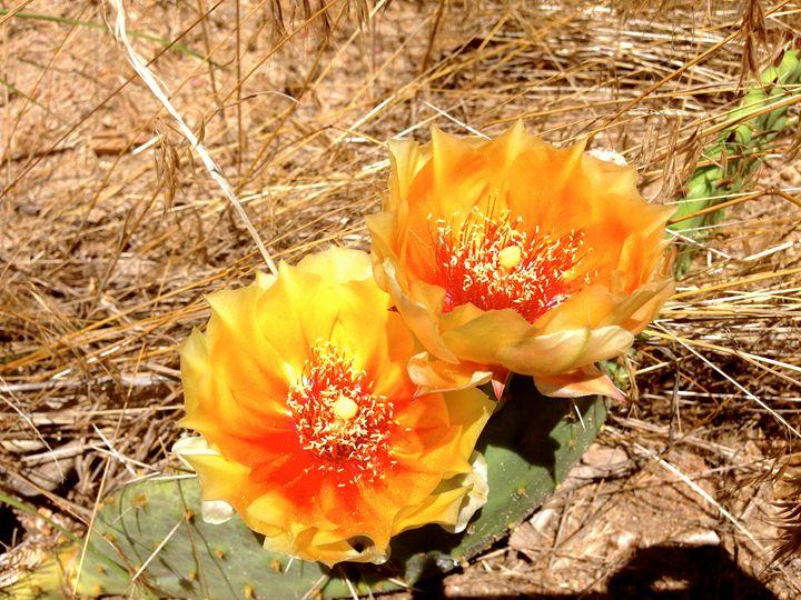 Cactus Flower 4 - Annie Wasserman