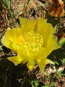 Cactus Flower 7