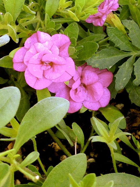 May Flowers - Annie Wasserman