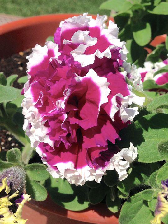 Dip Dyed Flower - Annie Wasserman