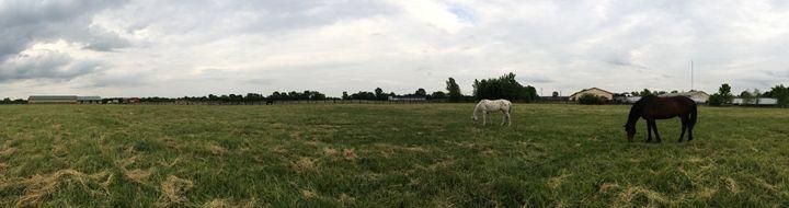 Field Eleven's Horses - Abigail Arculeo