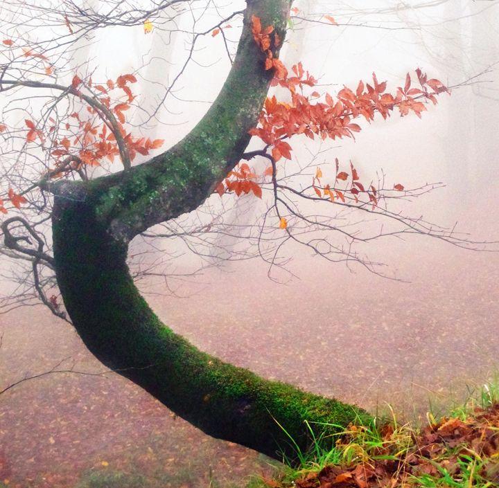 Red Leaves - Moshe