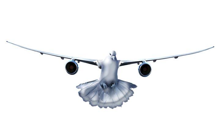 Ready To Fly - BYART