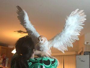 Barn owl art doll
