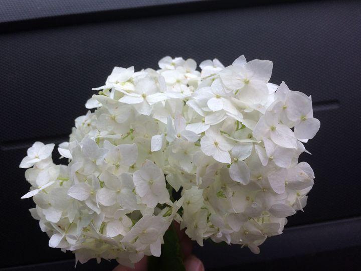 White flower -  Maryq60