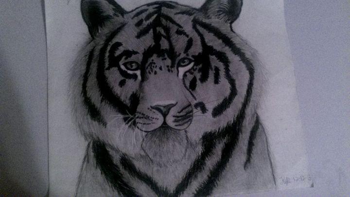 Bangal tiger - Kyli