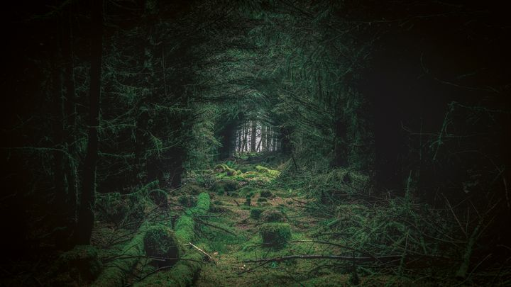Fairy Forest - Ste Photography
