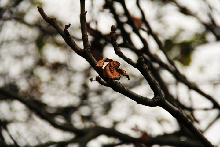 Leaves Farewell by Lloyd B. - Lloyd