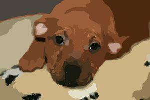 Dog Draw 1