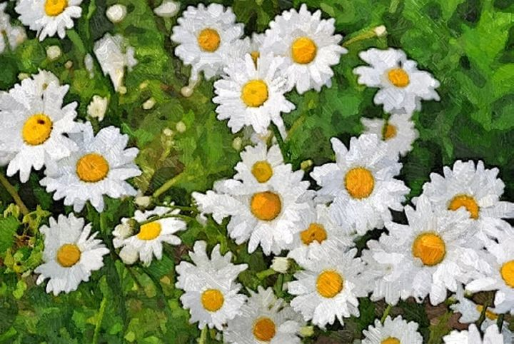 Flower Flower - Sophia Brown