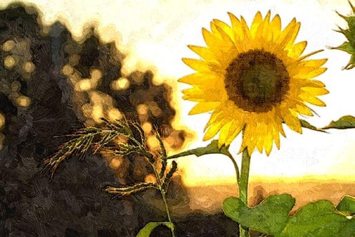 A Sun flower - Sophia Brown