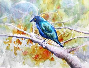 Purple Glossy Starling II. - Ibolya Taligas Watercolours