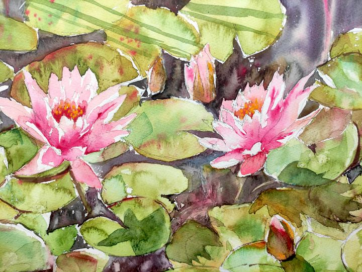 Pink Waterlilies in a pond - Ibolya Taligas Watercolours