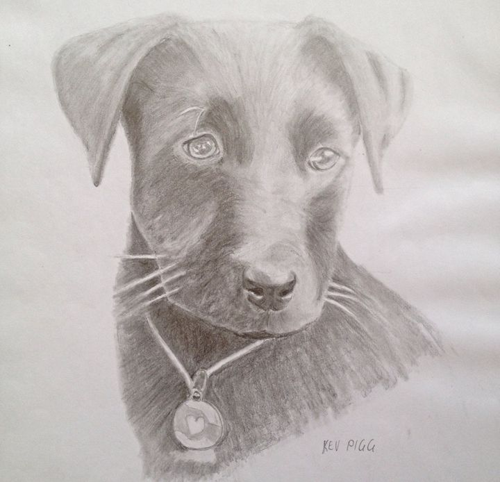 Puppy love - Kev Piggasso