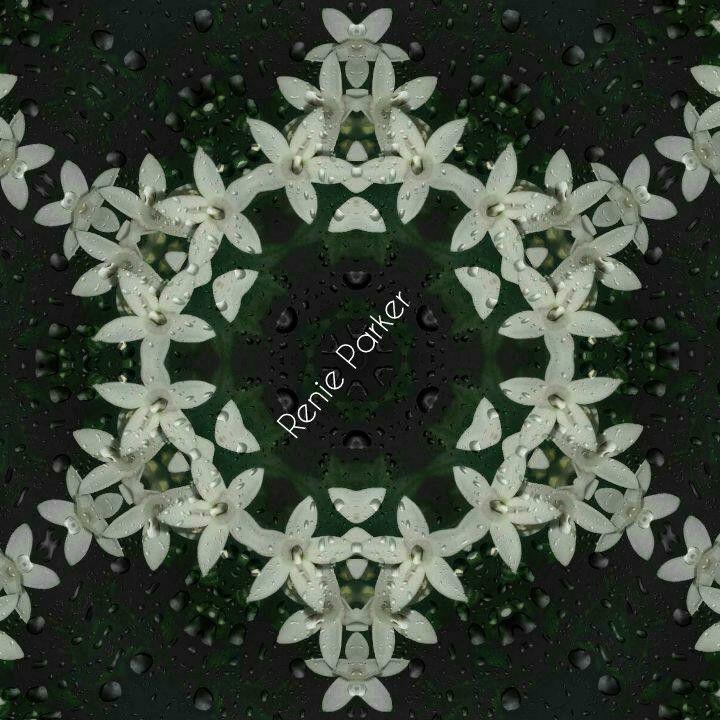 Night Flower Kaleidoscope - Parker's Prints