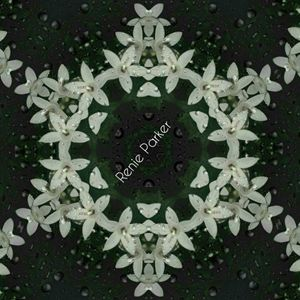 Night Flower Kaleidoscope
