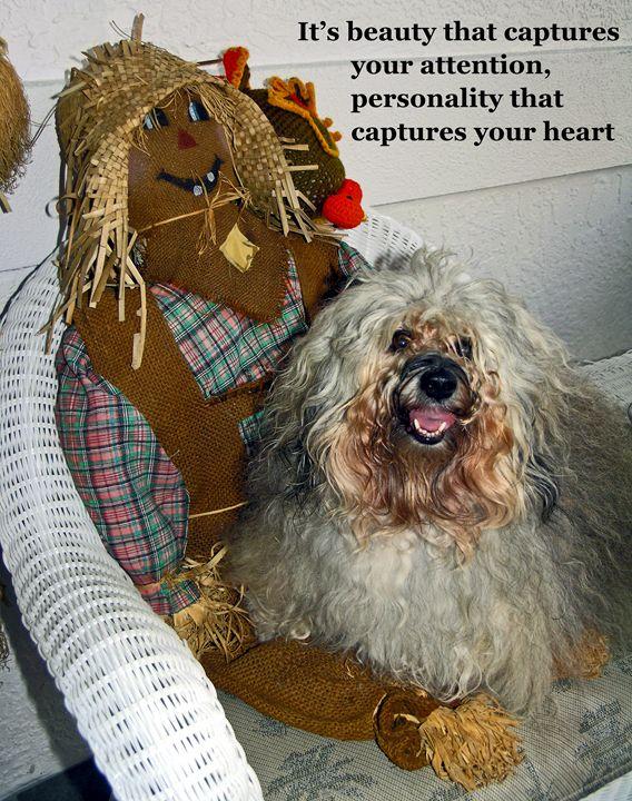 Havanese Dog - Sally Weigand Images