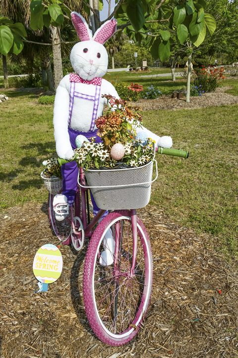 Biking bunny - Sally Weigand Images
