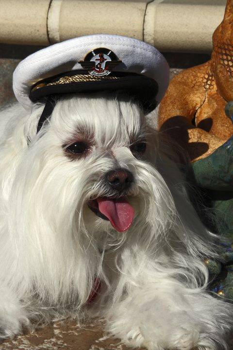 Captain Dog - Sally Weigand Images
