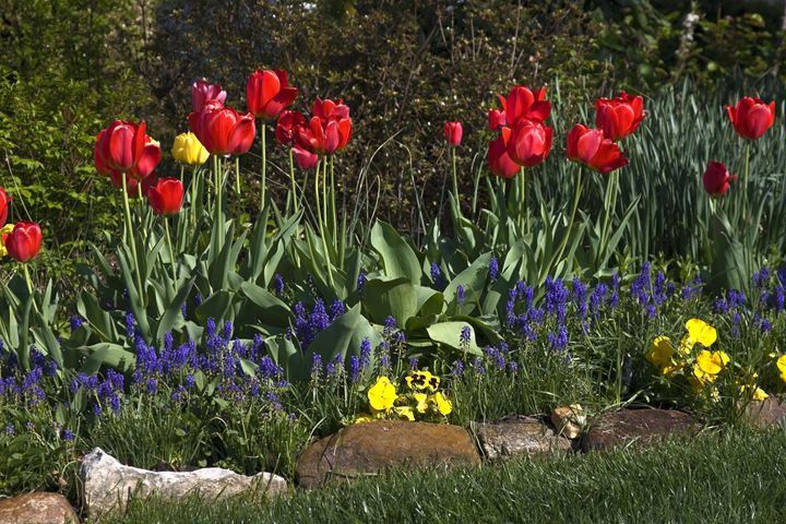 Spring Flowers - Sally Weigand Images
