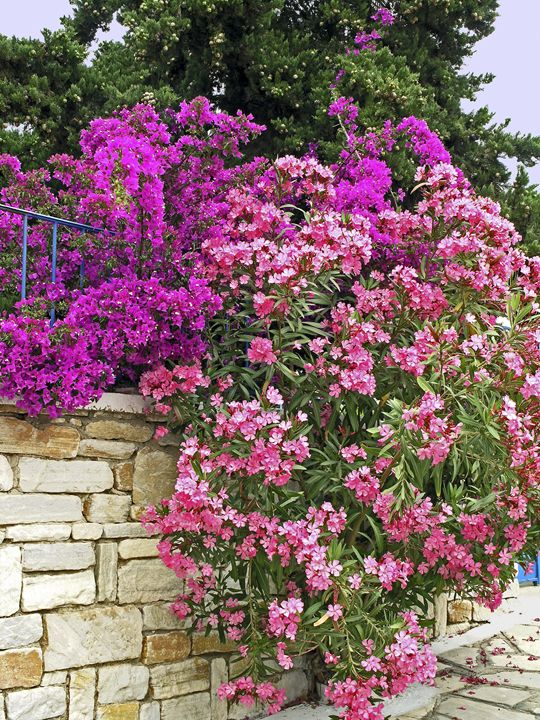 Flowering Shrubs - Sally Weigand Images