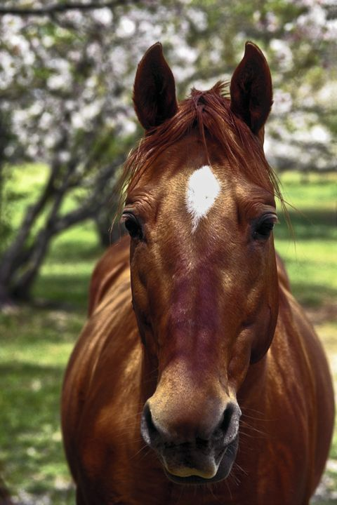 Horse Looking at You - Sally Weigand Images