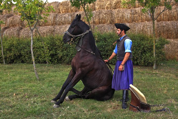 Traditional Hungarian Cowboy - Sally Weigand Images