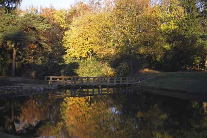 Autumn Trees & Footbridge Reflected - Sally Weigand Images