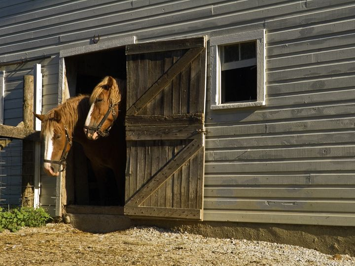 Horses at Barn Door - Sally Weigand Images