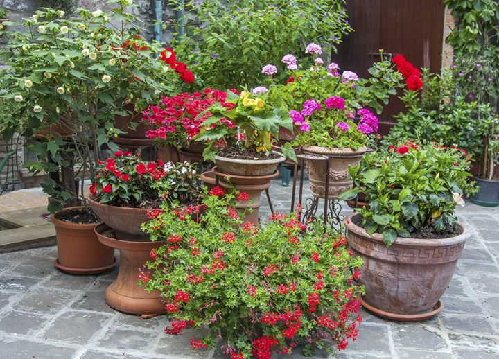 Flower Pot Cluster - Sally Weigand Images