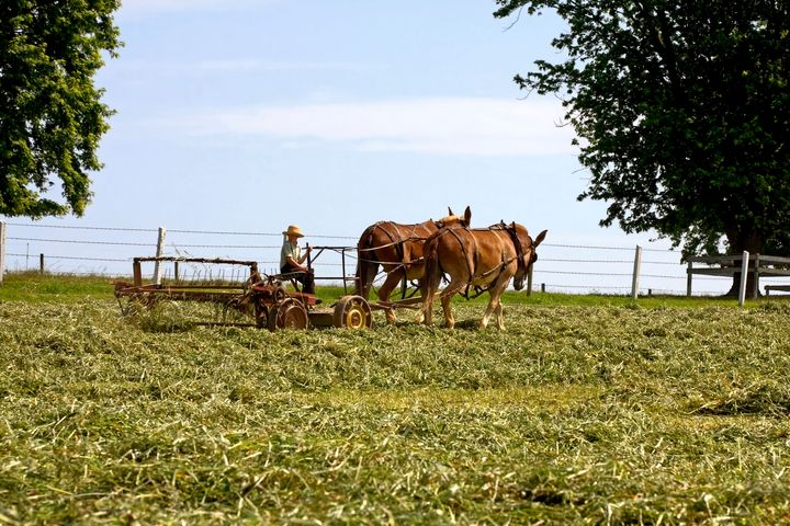 Amish Boy Working the Farm - Sally Weigand Images