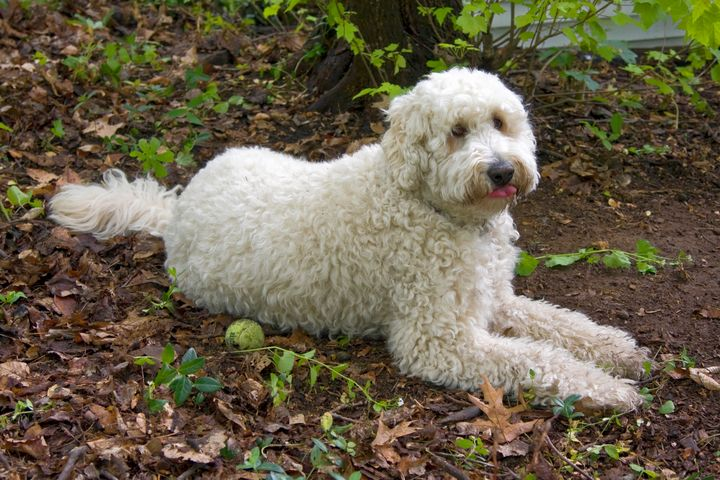 White Dog - Sally Weigand Images