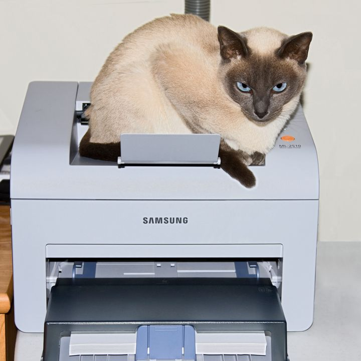 Tonkinese Cat in Printer - Sally Weigand Images