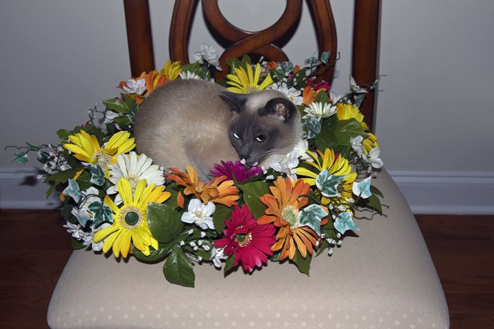 Cat in Wreath - Sally Weigand Images