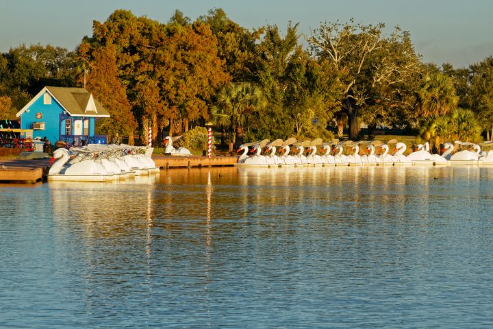 Swan Boats at City Park - Sally Weigand Images