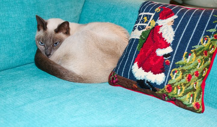 Tonkinese Cat By Christmas Pillow - Sally Weigand Images
