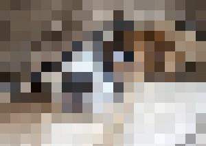 puppy - Leon Natan