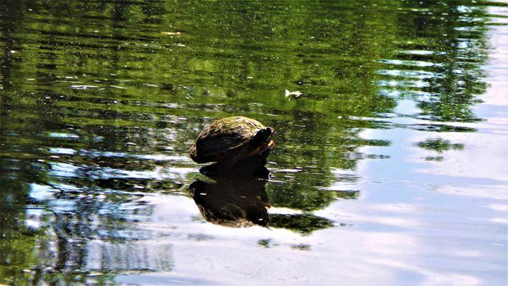 Solitary Turtle - Jonathan M. Schwartzman